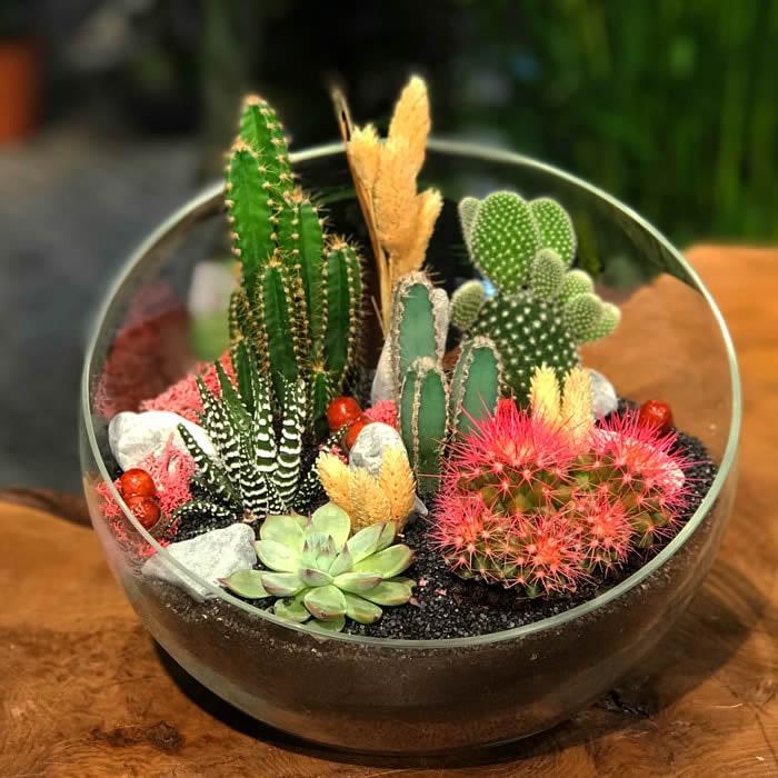 Teraryum Bitkileri Nelerdir - Kaktüsler